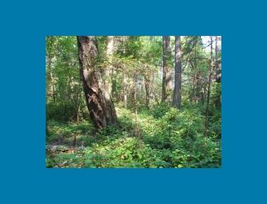 Coastal Douglas-fir Understory S. Saunders