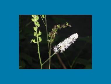 Flower head & seed pods Brian Klinkenberg