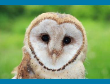 BC Barn Owl S. Hindmarch