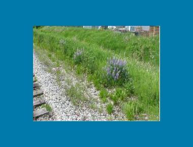 Railbed corridor - Delta M. Brotherston