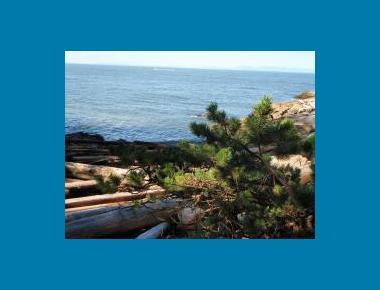 Shore pine on marine bluff P. Zevit